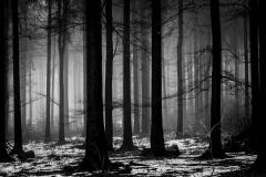 foggy_wood