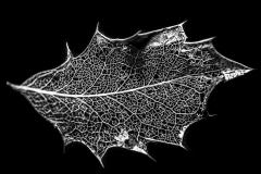 the_broken_leaf