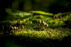 Fairy tale mushrooms II